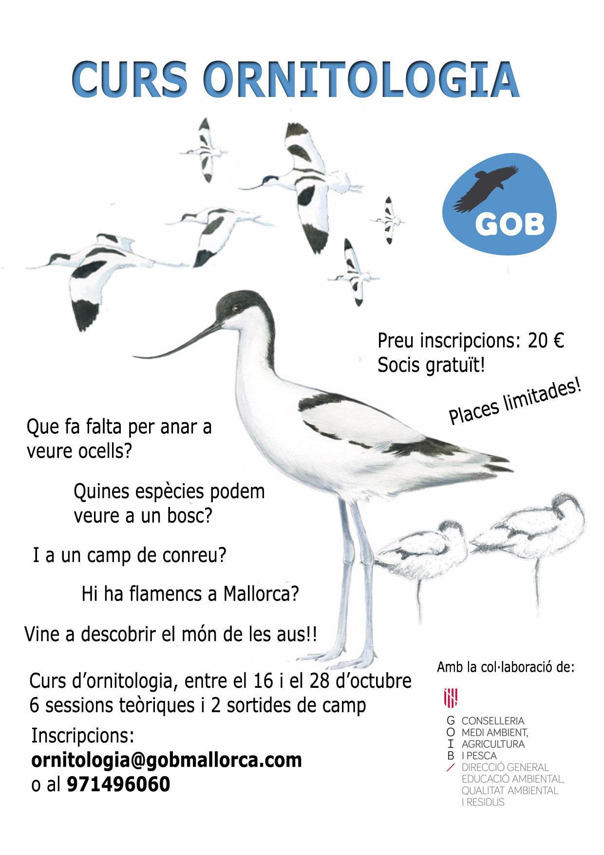 Curs ornitologia